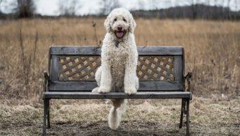 Ein Hund, der auf einer Bank sitzt